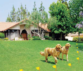 ELECTRIC DOG FENCE, WIRELESS AND WIRE DOG FENCES PET